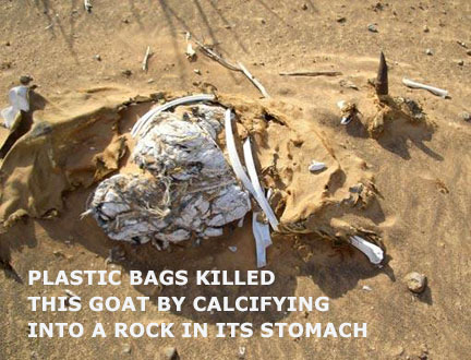 Plastic bags killed this goat by calcifying into a rock in its stomach.